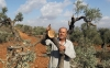 A farmer from Qaryut village inspects olive trees that were destroyed in an overnight settler attack on Oct. 9, 2012.