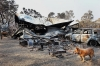 A dog stands near a home/business in Yellow Rock that was destroyed by the fire.