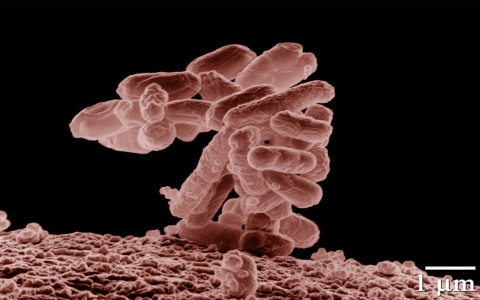 Thumbnail image for California company recalls poultry products amid E. coli scare