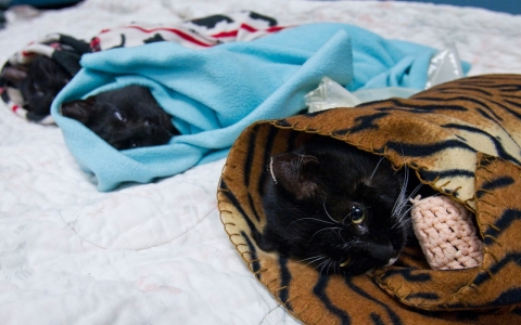 Feral cats recovering