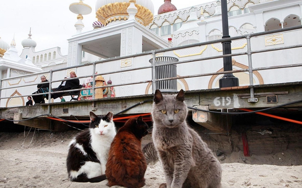 US Is Overrun With More Than Million Feral Cats Al Jazeera - Stray animals in the us map