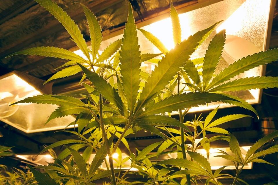 Image result for Home grown Medicine
