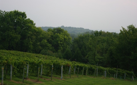 Missouri has 125 operating wineries and more than 400 vineyards.