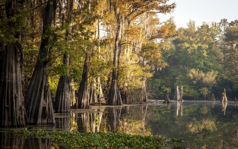 Thumbnail image for Louisiana forests being sacrificed to fuel Europe's biomass boom