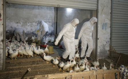 Outbreak of bird flu cases in China worries health officials