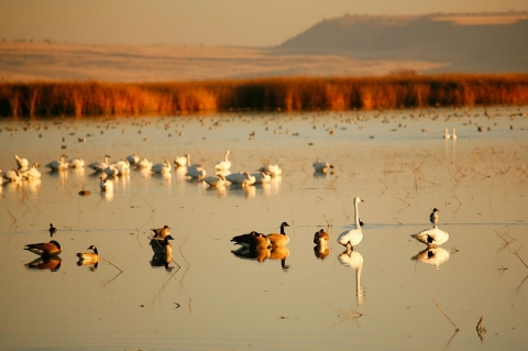 drought, california, wildlife