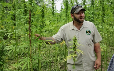 Mike Lewis hemp