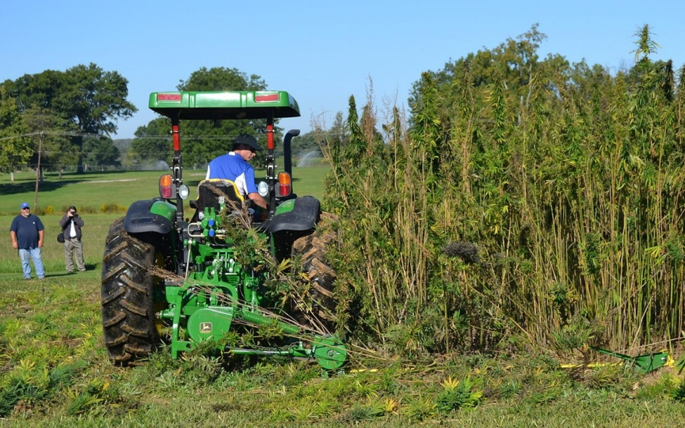 Image result for on the farm hemp research