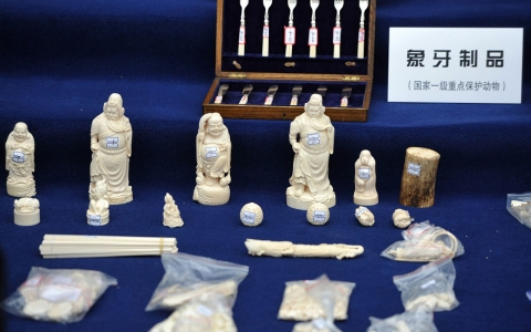 Thumbnail image for Report: Chinese smuggled ivory out of Tanzania during state visit