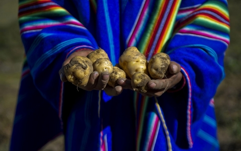 Thumbnail image for Peru's indigenous preserve biodiversity in Andes Potato Park