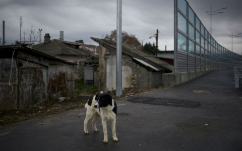 Thumbnail image for Sochi orders killing of stray dogs