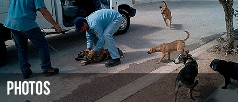 Thumbnail image for Mexico's city of dogs