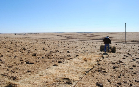 drought, Pine Ridge reservation, bison