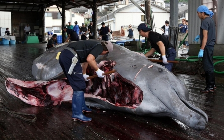 U.N. court orders Japan to halt Antarctic whaling program