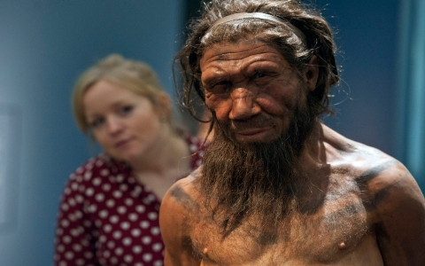 Thumbnail image for Neanderthal demise not caused by inferiority, new study suggests