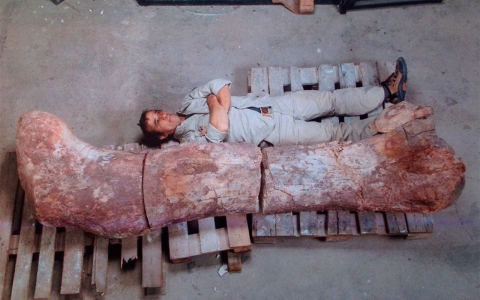Thumbnail image for Scientists unearth world's largest dinosaur in Argentina