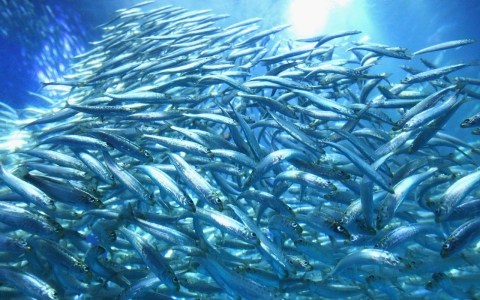 Thumbnail image for U.N.: Record-high global demand for fish threatens oceans