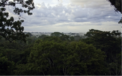 Thumbnail image for Ecuador issues oil-drilling permit for Amazon reserve