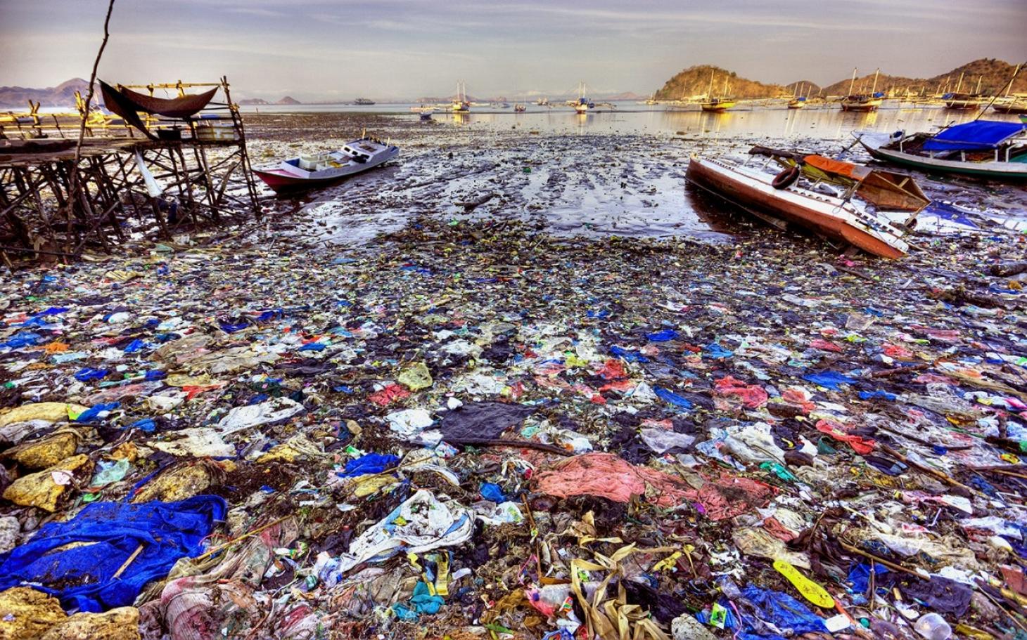 marine toxins content 2015
