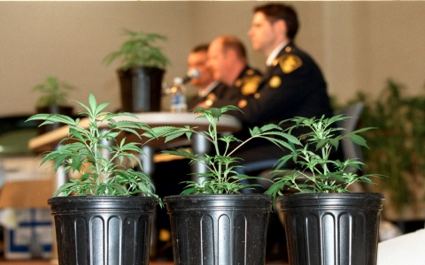 Thumbnail image for DEA obstructs research into medical marijuana: report