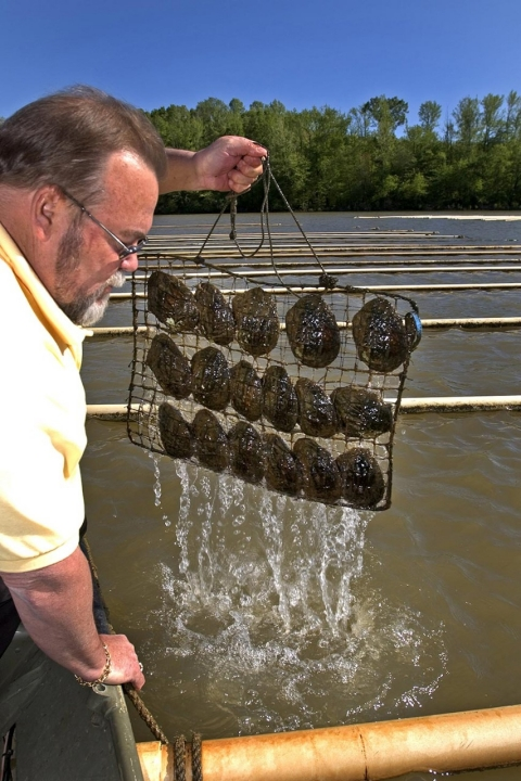 Bob Keast, owner of Tennessee River Pearls with a basket of mussels