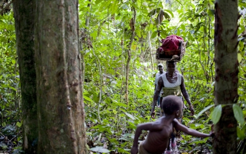 Thumbnail image for Deforestation, development may be driving Ebola outbreaks, experts say