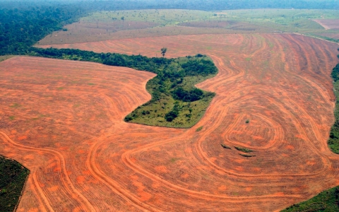 Thumbnail image for Destruction of Brazilian Amazon spikes by almost a third
