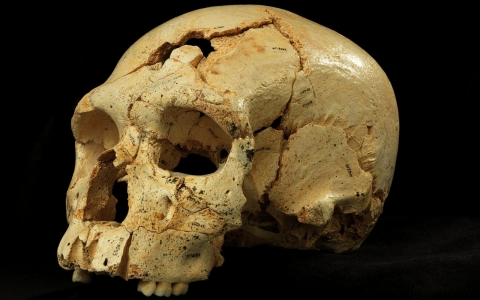 Thumbnail image for UK confirms finding Richard III's skeleton