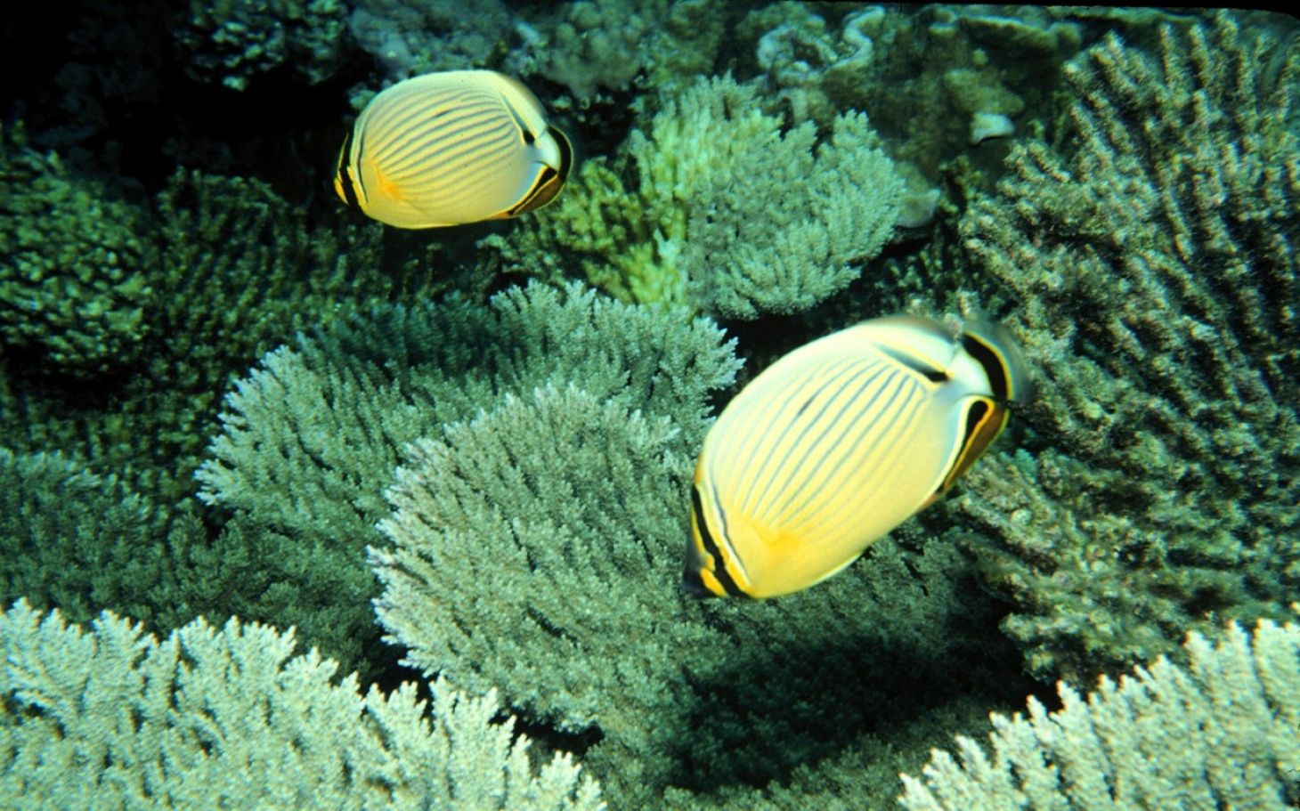 study ocean life faces mass extinction al jazeera america