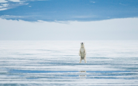 Thumbnail image for Study finds relentless long-term decline in Arctic environment