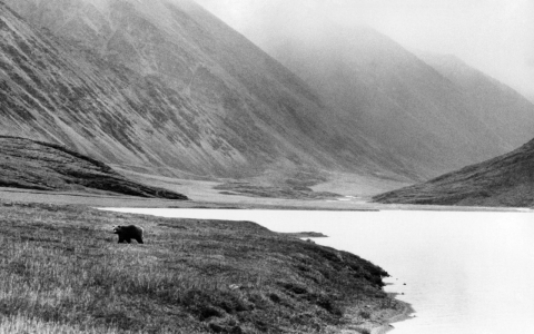 Thumbnail image for Alaska legislators livid over Obama's plan to expand Arctic refuge