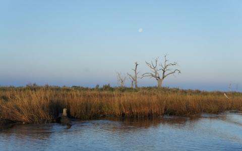 Thumbnail image for As Louisiana's marshes erode, so does the Houma Indians way of life