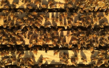 Let it bee: Rise of urban apiaries has New York City buzzing