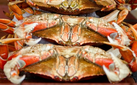 A California crab ban reveals trouble in the Pacific Ocean