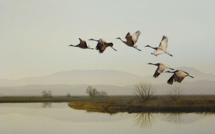 Migratory birds impacted by California drought