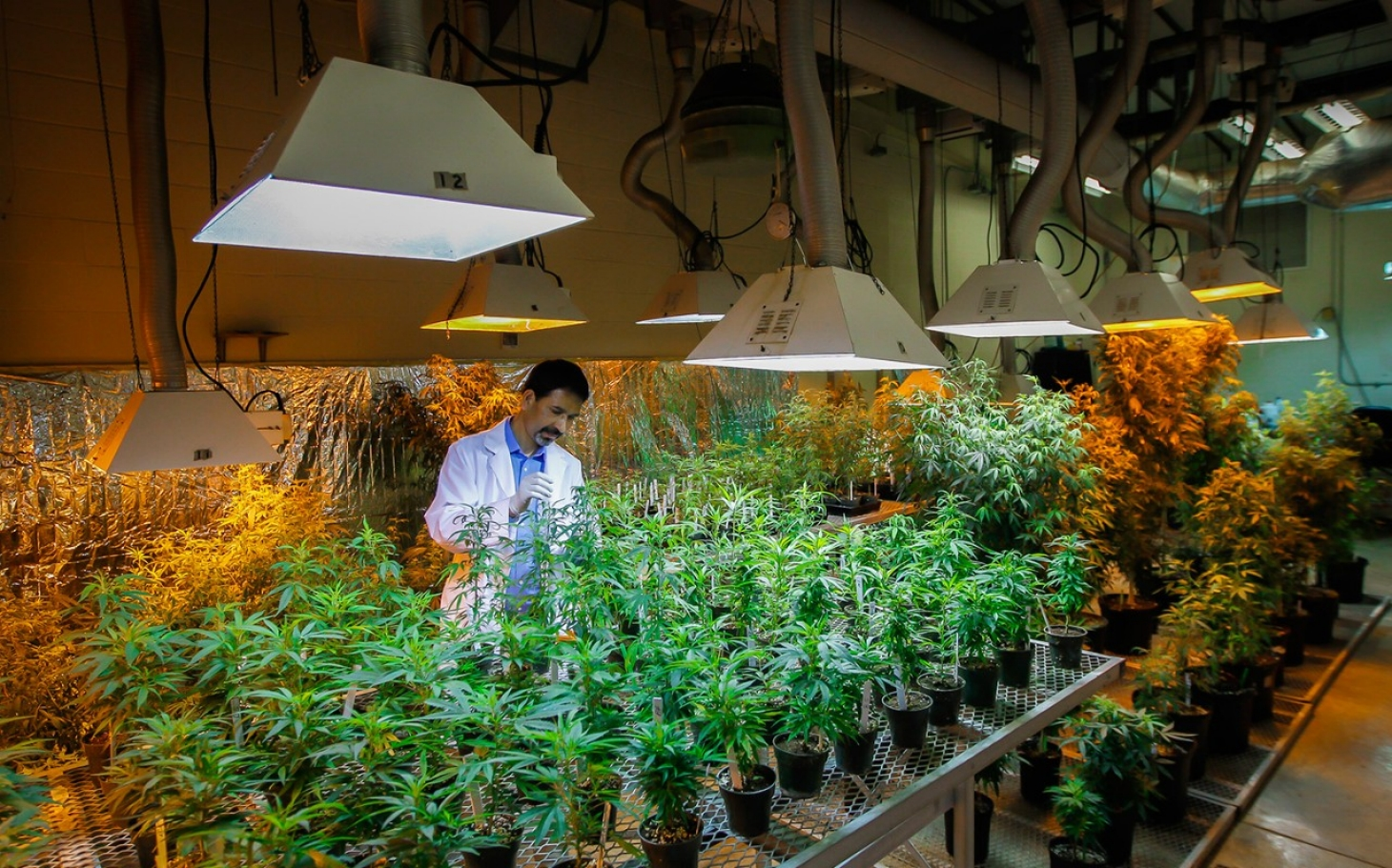 a study on legalization of marijuana in america Canada senate to vote on marijuana legalization  america's best states for  a new study found there is a higher rate of employment among people with.