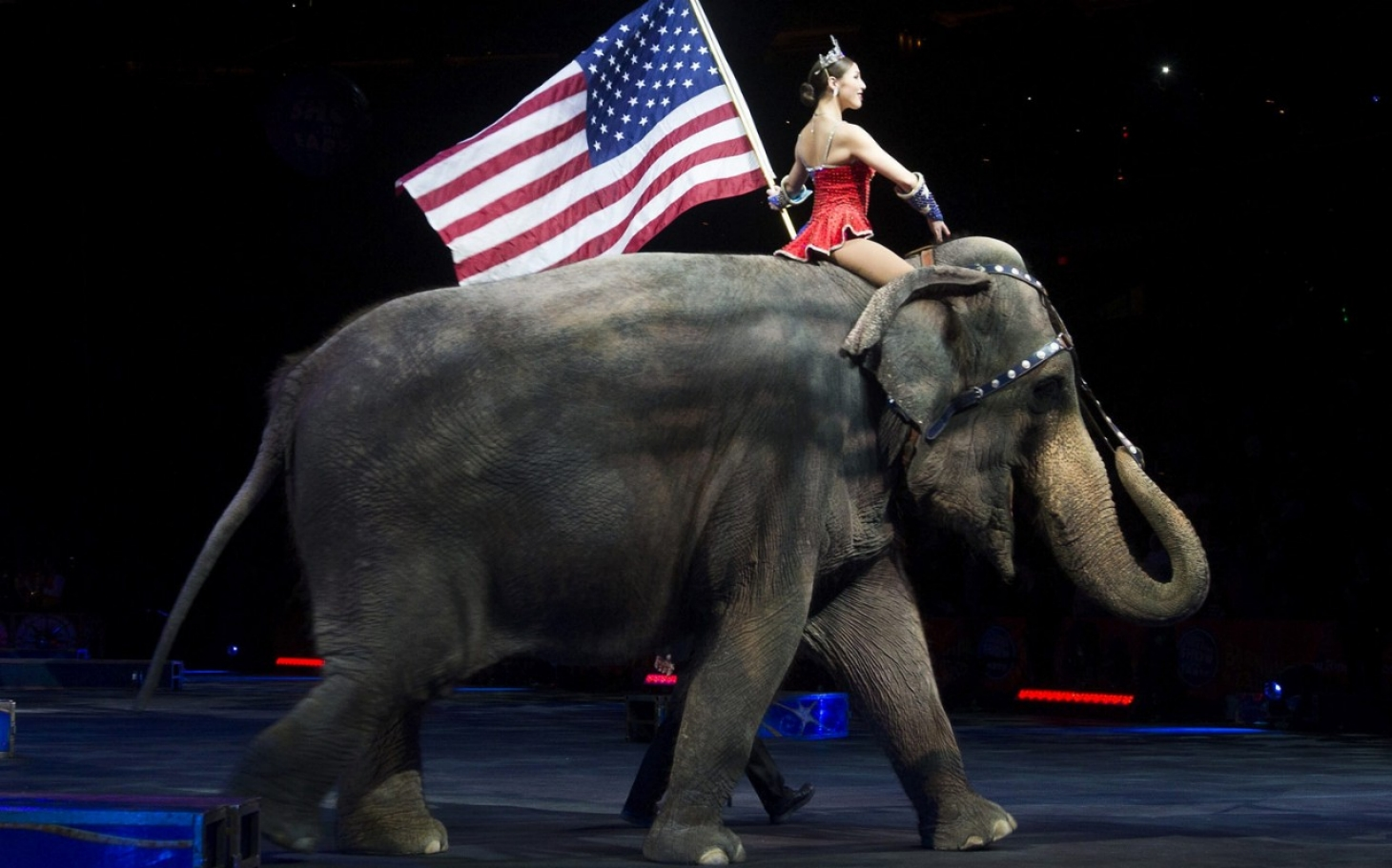 nonhuman rights groups  elephants are people too