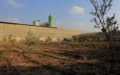 Thumbnail image for Organic farms in the West Bank: Hemmed in by smokestacks, separation wall