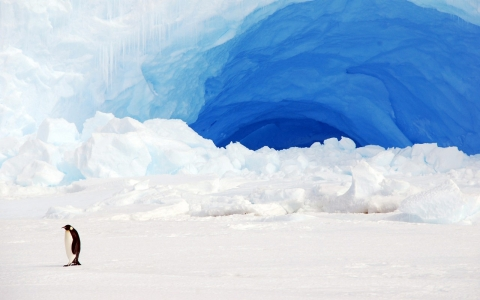 Thumbnail image for Scientists warn Antarctic melting more extensive than previously thought