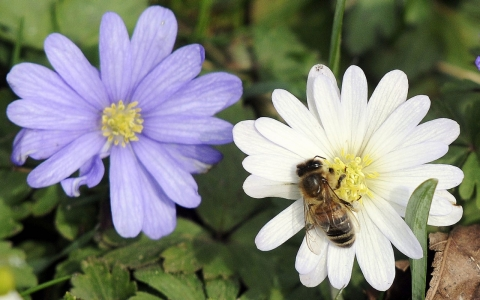 Thumbnail image for US to halt new use of some pesticides amid honeybee decline