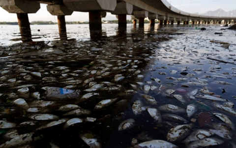 Thumbnail image for Brazil removes 50 tons of dead fish from Olympic waters