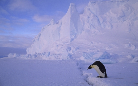 Antarctic ice shelf could crumble, says NASA study