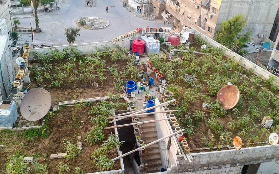 In The Desperate Damascus Neighborhood Of Yarmouk, Growing Food Is Matter  Of Life Or Death