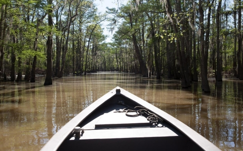 Atchafalaya swamp fracking