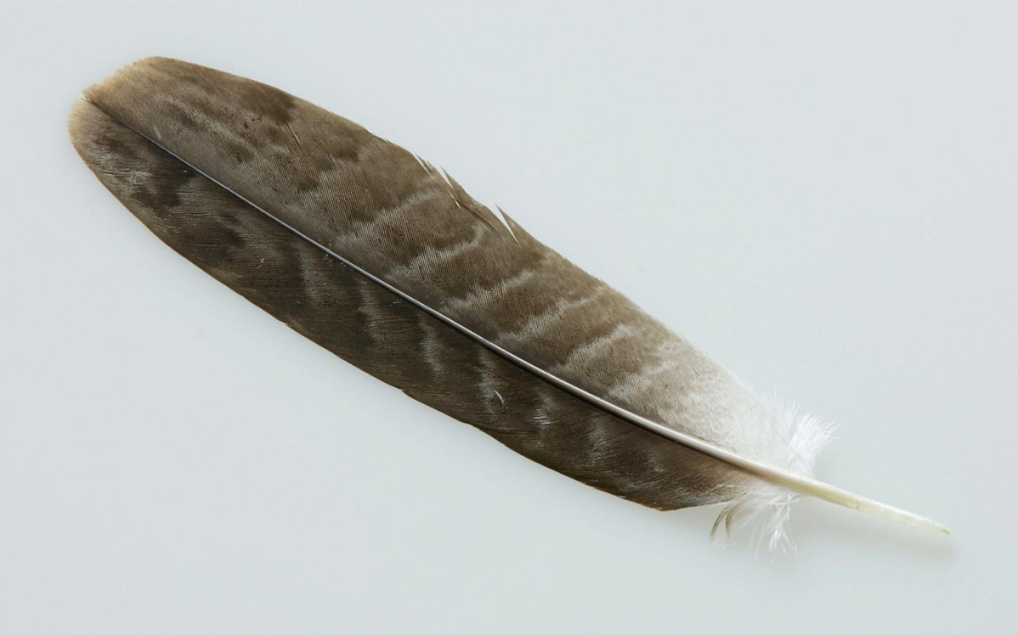 California Student May Wear Eagle Feather Al Jazeera America