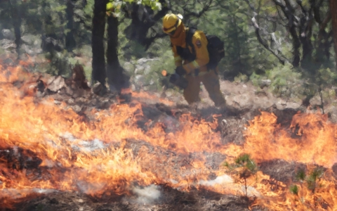Thumbnail image for Fighting fire with fire may reduce risk of major wildfires during drought