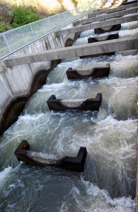 Fish ladder, Lower Granite dam, sockeye salmon