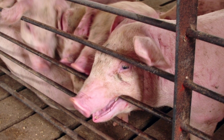 Judge: Idaho's 'ag-gag' law is unconstitutional