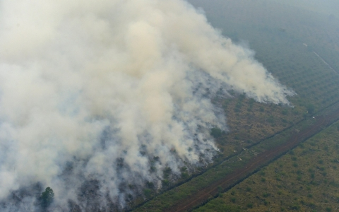 Thumbnail image for Indonesia arrests 7 over haze-inducing forest fires