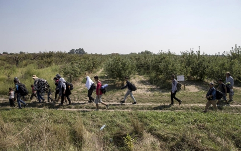 Refugees hoping to cross into Hungary walk through a field outside the village of Horgos in Serbia.